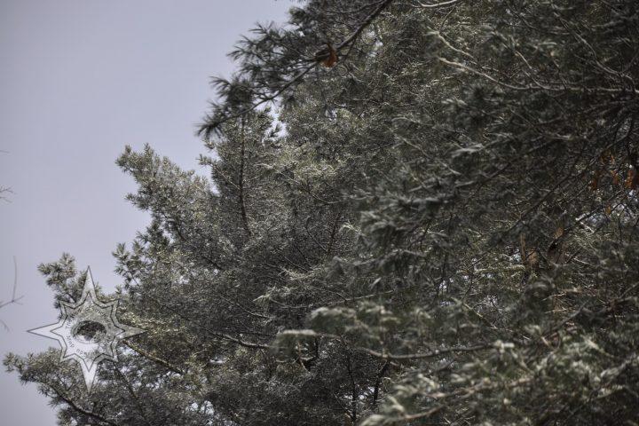 Тайга, снегопад, Мир приключений