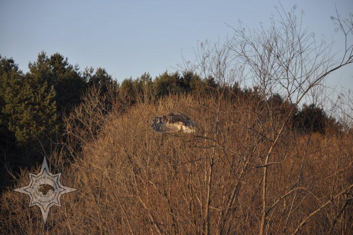 Центр реабилитации диких животных Утес, полет филина