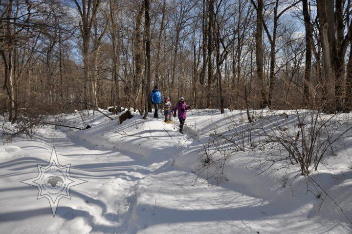 Прогулки семьёй по лесу