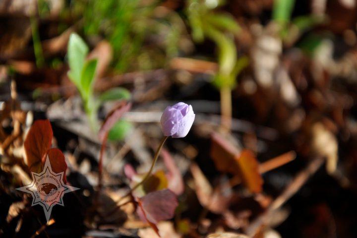 Весна в тайге