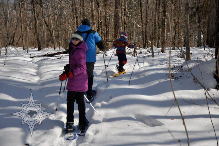 Мир приключений прогулки по тайге на снегоступах