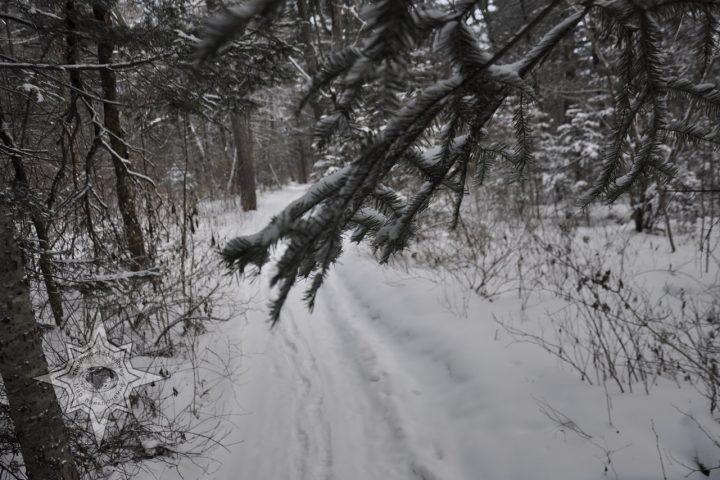 Прогулки по зимнему лесу